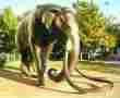 Columbia Mammoth