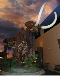 Mastodon Skeleton Reproduction