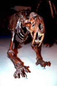 Saber-Toothed Cat Skeleton