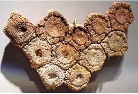Glyptodont Fossil Scutes