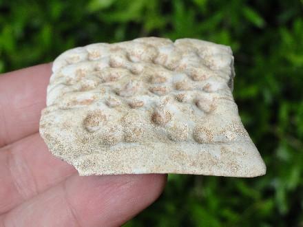 Fossil Crocodile Scute