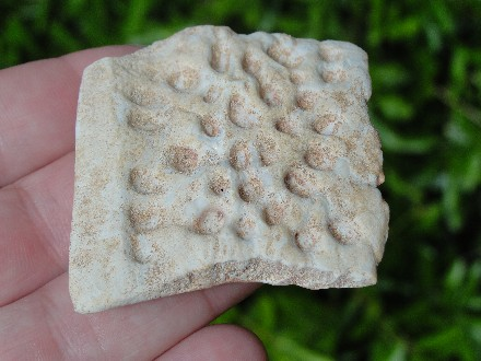 Fossil Crocodile Scute from Morocco