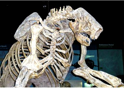 Jefferson's Ground Sloth Skeleton