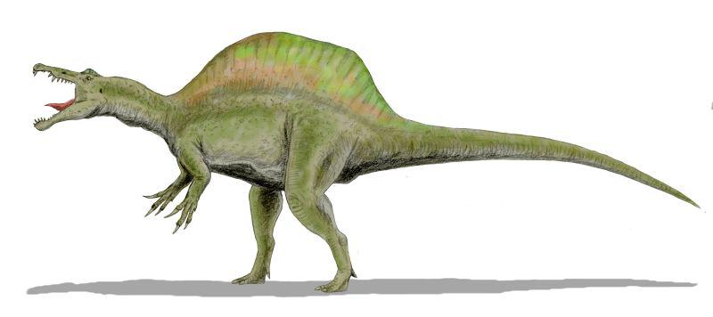 Drawing of a Spinosaurus