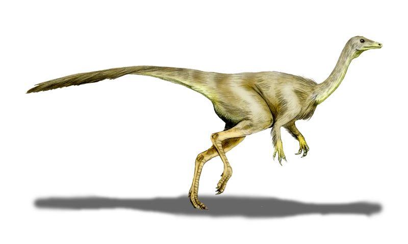 Struthiomimus Dinosaur