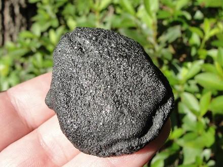 Tortoise Fossil Leg Spur
