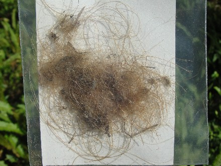 Real Woolly Mammoth Hair