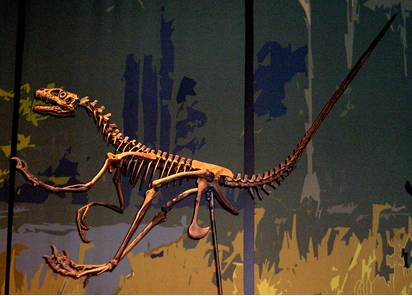 Raptor Dinosaur Skeleton