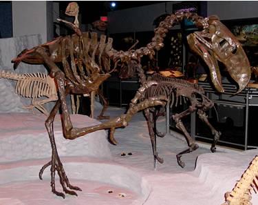 Terror Bird Skeleton Photo