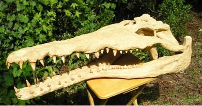Gavialosuchus americanus Skull