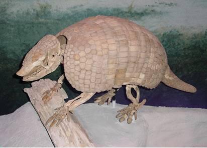 Giant Armadillo Skeleton Fossil
