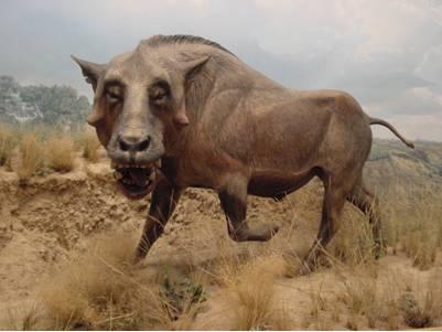 Entelodont, Extinct Giant Hog