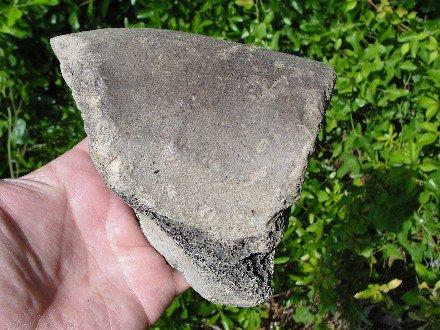 Giant Tortoise Fossil Shell