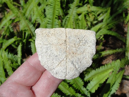 Turtle Plastron Fossil Shell Ice Age