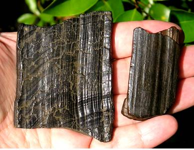 Fossil Tusk Bark Ivory