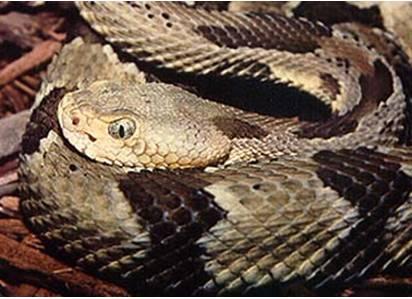 Modern Snake