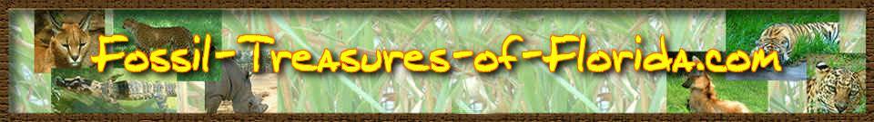 Fossil Newsletter